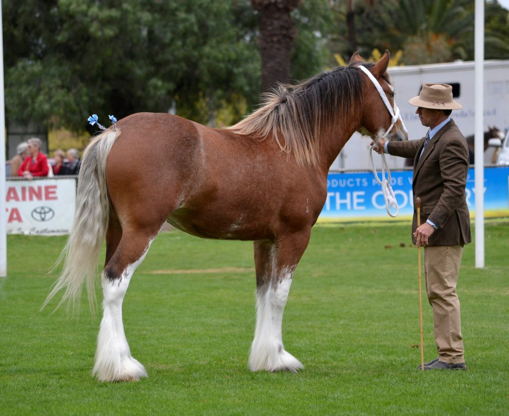 Aarunga Miss Universe Reserve Champion Yearling