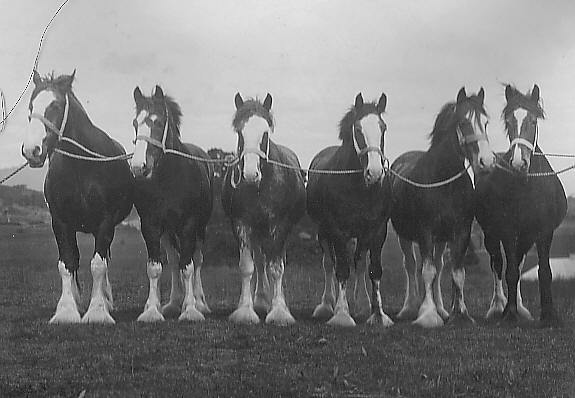 Mares belonging to Wm. Black of Coldstream Victoria 1927
