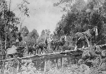 Clydesdales hauling timber in the Warburton region of Victoria