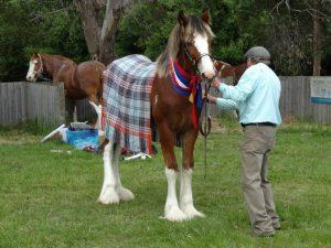 Brockhampton Statesman winner Crofters Taartan rug
